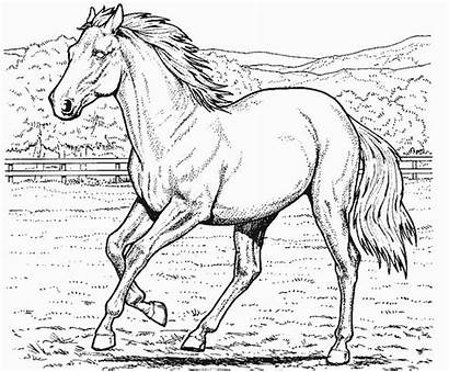 Horse Coloring Pages Horses Colouring Printable Odd