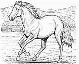 Coloring Horse Realistic Pages sketch template
