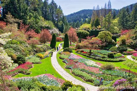 Gardens Bc - butchart gardens visitor in