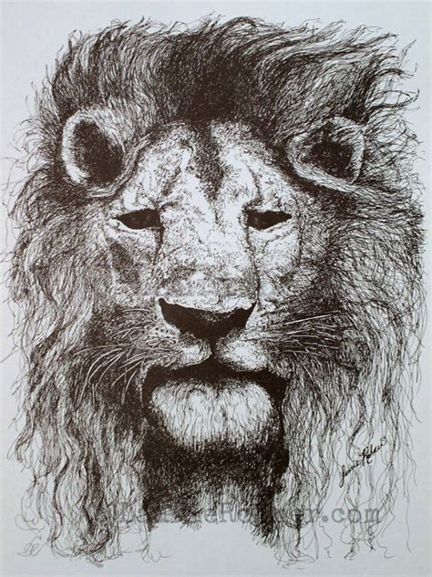 Ink Nature Illustration Lion With Mane Original Drawing