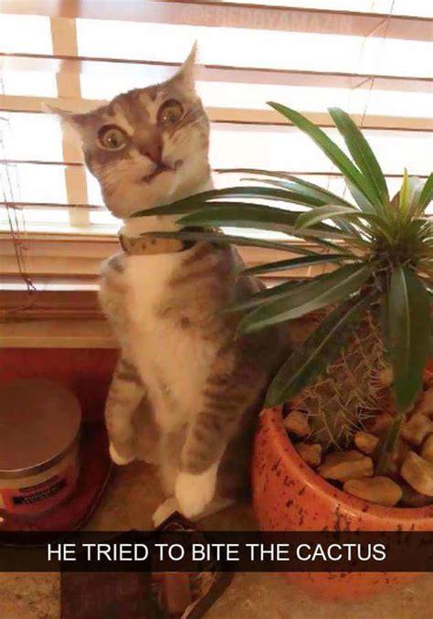 crazy cat memes guaranteed    laugh cutesypooh