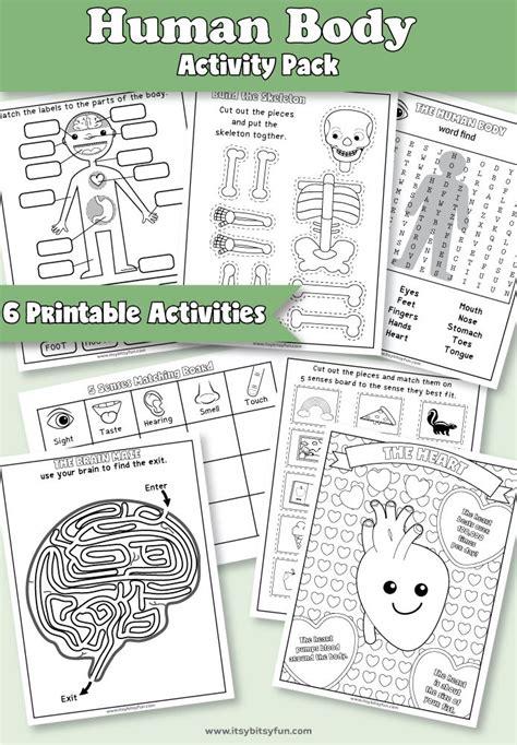 Best 25+ Human Body Activities Ideas On Pinterest  Human Body Crafts For Kids, The Human Body