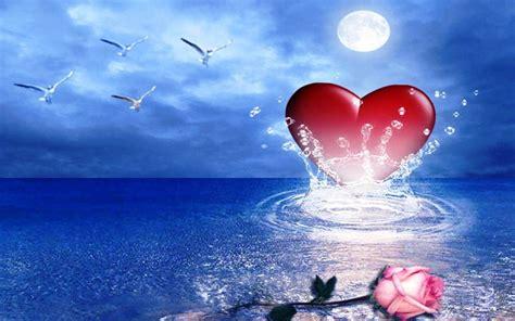 pink rose heart sea birds hd wallpaper wallpaperscom