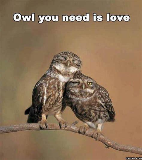 Meme Owl - home memes com