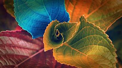 Leaves Fhd Different Wallpapers Colors Wallpapercare