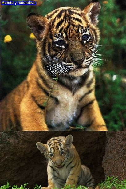 Naturaleza Animales Paisajes Mas Temas Animadas Muchos