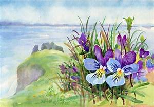 Primavera fiori viola sulla montagna Foto Stock © nadiastar #32257865