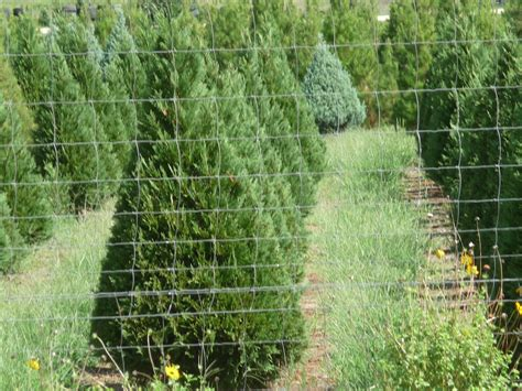 cut your own christmas tree westminster md south real estate farm and ranch san antonio relocation
