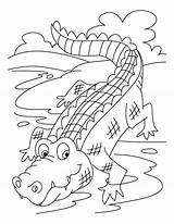 Coloring Crocodiles Sheets Animals Source sketch template