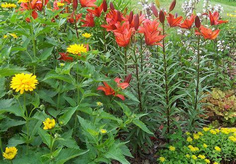 perennial plants mail order perennials bed mattress sale