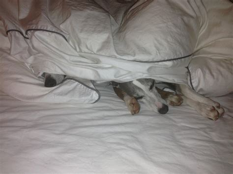 Welches Kopfkissen Für 5 Jährige Kaeppel Bettwäsche