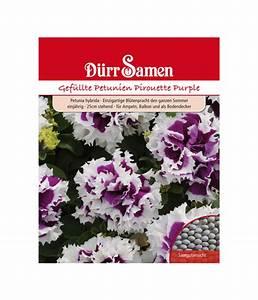 Petunien Samen Kaufen : d rr samen gef llte petunien 39 pirouette purple 39 dehner ~ Frokenaadalensverden.com Haus und Dekorationen