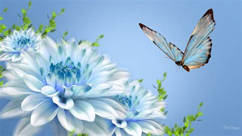 butterfly  flower wallpapers wallpaper cave