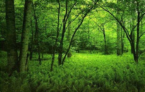top  awesomeamazing  beautiful greenery wallpapers  hd