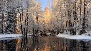 winter forest landscape 1 HD Wallpaper