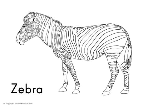 Cartoon Zebra Without Stripes Coloring Pages