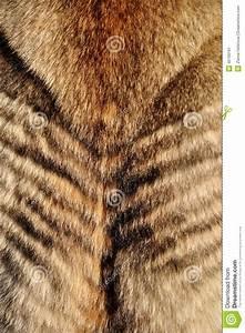 Wolf Fur Stock Photo - Image: 46760161
