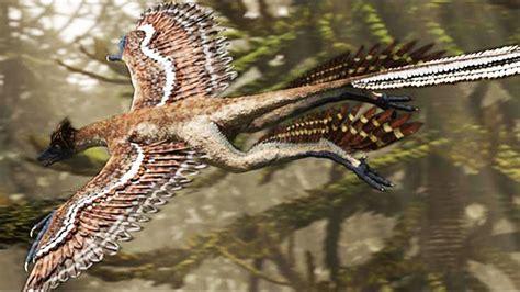 Dinosauro Volante Microraptor Le Dinosaure Chasseur Volant Zapping