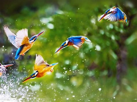 flying birds hd wallpapers images  pinterest