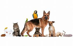 Midway Animal Hospital - Your Veterinarian in Citrus County