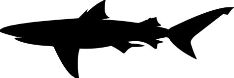 Shark Silhouette Png