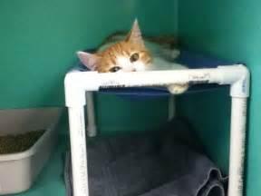 cat hammock diy 32 best images about cat stuff on cat litter
