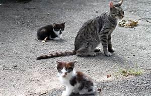 Katzen Fernhalten Von Möbeln : ehrenamt betreuung wildlebender katzen tierschutzliga ~ Michelbontemps.com Haus und Dekorationen