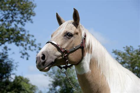 wie kommt es zu hautkrankheiten bei pferden tierheilkunde