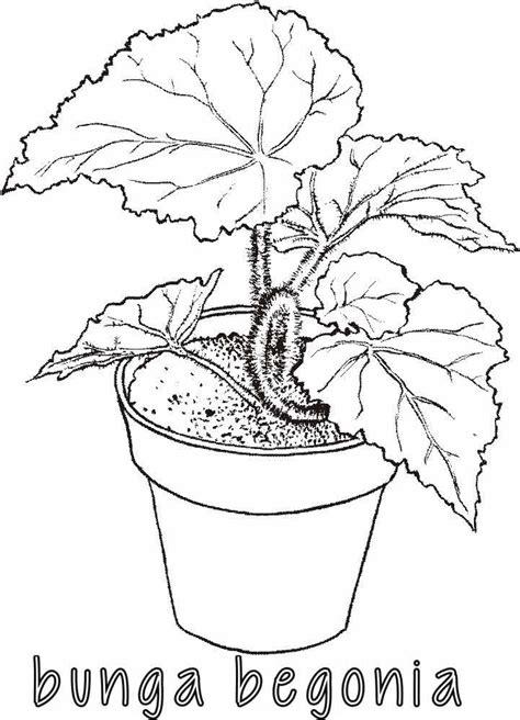 mewarnai gambar sketsa vas bunga terbaru