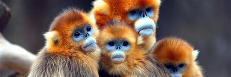 https://twitter com/Strange Animals Types of monkeys