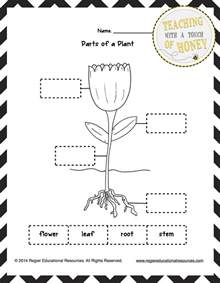 Plants Worksheets Gallery For Gt Parts Of A Plant Worksheet Cut And Paste