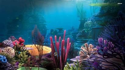 Aquarium 1080p Fish Pc