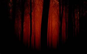 Dark Scary Forest Wallpaper - WallpaperSafari