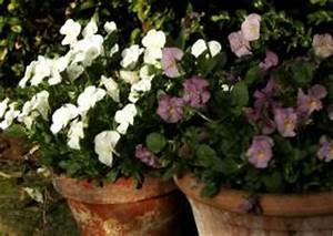 Kübelpflanzen Für Schatten : fr hjahrsbepflanzung k bel schalen blumenampeln pflanzk bel pflanzen fr hlingsbepflanzung ~ Eleganceandgraceweddings.com Haus und Dekorationen