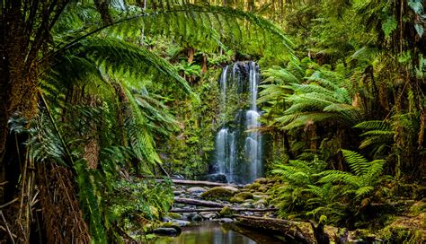The Most Amazing Rainforests In Australia MapQuest Travel