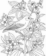 Coloring Pages Flower Hawaiian Hawaii Printable Drawing Flowers Bird Luau Adult Sheets Birds State Reference Azcoloring Idaho Popular Turtle Sea sketch template