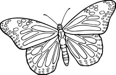 Butterfly Line Drawing Clip Art Free