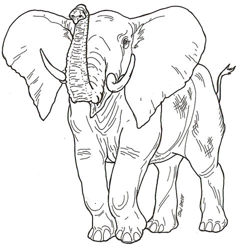 elephant front view drawing  getdrawings