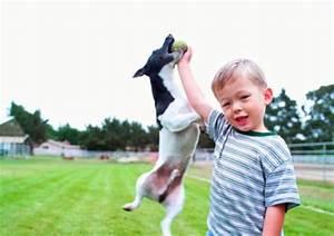Haustiere Für Kinder : kinder und haustiere welches tier fuer welches alter familie und kinder berichte ~ Orissabook.com Haus und Dekorationen