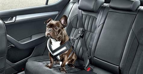 skoda unveils  seatbelt    dog safe   road