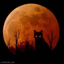 moon cat harvest moon cat pictures photos and images for