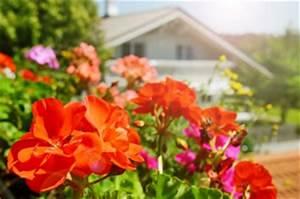 Blumen Für Schattigen Balkon : die besten balkonpflanzen f r sonnige und schattige balkone ~ Orissabook.com Haus und Dekorationen