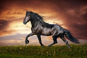 Horse Wallpaper Hd, Awesome 45 Horse HD Wallpapers
