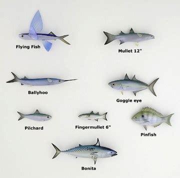 bait fish reneelayla