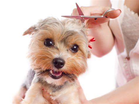 dogs hair cut