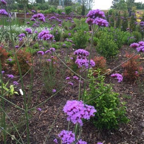 tulsa botanic garden last updated june 11 2017 68