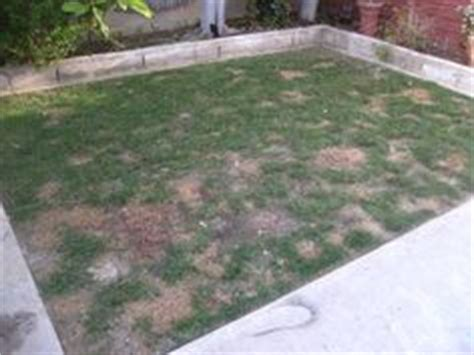 a way to repair brown grass from urine