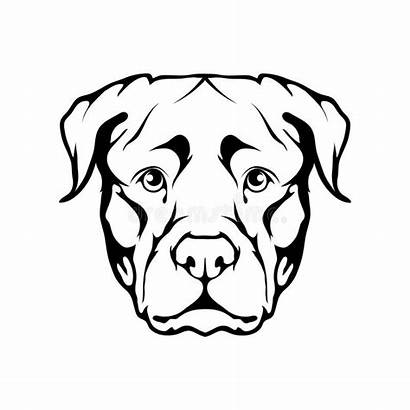 Rottweiler Icon Drawing Dog Vector Clipartmag