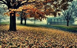 Forest, Fall, Desktop, Images, Amazing, Dual, Monitor, Tree, Nature, Autumn, Landscape, Leaves
