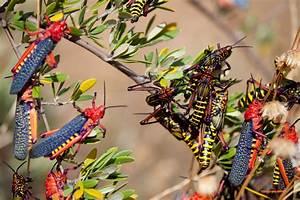 Olivenbaum Im Topf : sch dlinge am olivenbaum so bek mpfen sie sie ~ Michelbontemps.com Haus und Dekorationen